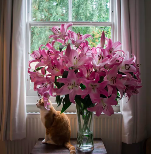 Don't gild the lily in a house of cats